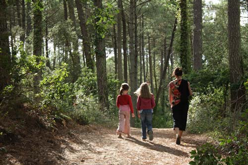 Chemin forestier Moliets