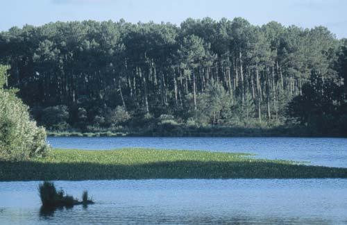 Pêche sur les étangs de Moliets et de La Prade