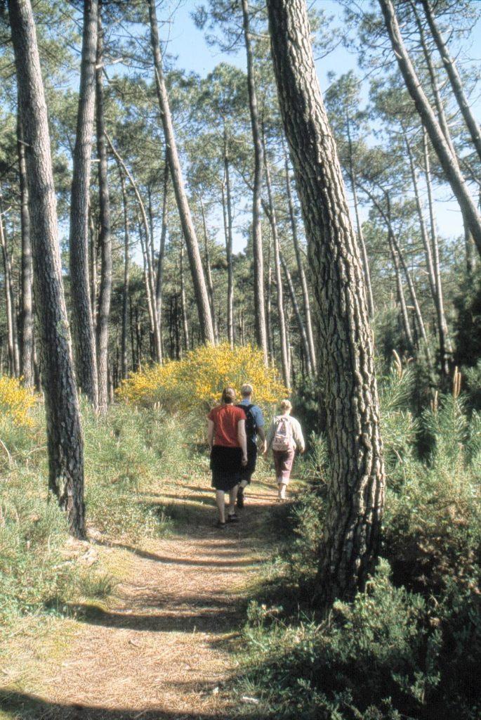 Balade en Forêt Moliets